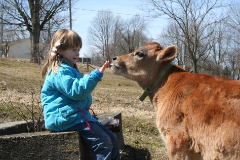 Ava loves spending time with the youngest calves.